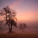 Červánková mlha