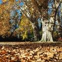 šustivý podzim...