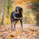 Psovo podzimní sdělení