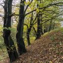 Podzimní nálada v lesíčku