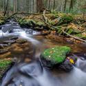 Losenický potok