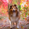 Kouzelná podzimní ulička