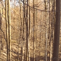 Les Milíře v listopadu