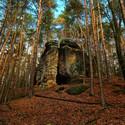 Kokořínský les