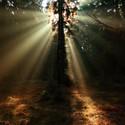 Lesní maják