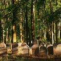 Židovský hřbitov Všeruby