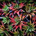 Podzimni barvičky