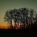 Západ slunce v akátovém háji