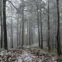 Smutný les