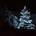 Noční stromek