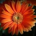 Orange...II.