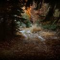 V lese IV