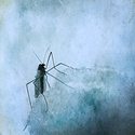 Otrlý hmyz