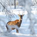 letošní zima v přírodě (6)