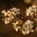 Jaro v plném proudu