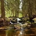 Šumava - vltavský potok