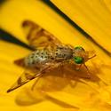 Ze života hmyzu (2)
