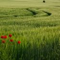 Oživení v polích