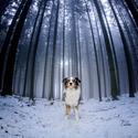 Dog in da Fog