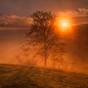 Strom na Křížovém vrchu