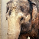 Sloní máma