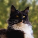 Šumavská kočka II
