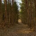 lesní odpoledne ....