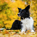 Podzimní Lady