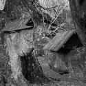 Strom u Bartošovického zámku