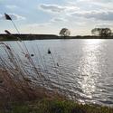 Vojický rybník  (Javorka)