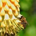Pilná jako včelka
