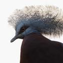 Lepší vrabec v hrsti než chocholoušek na střeše :).