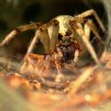 Pavouček a jeho oběd...