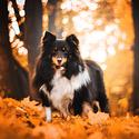 V podzimní barvě
