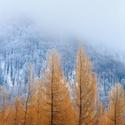 Zimní barvy