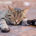 Kočka v Bologni