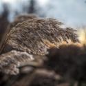 Příroda #01 - Zimní tráva