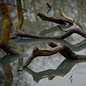 Větve ve vodě