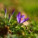 Že by jaro..krása se probouzí