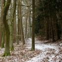 Lesní kontrast