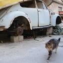 Kočka a brouk