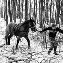 Koňská sila