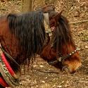 pomocník v lese