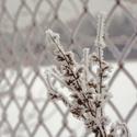 zimní kytice