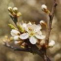 Volání jara ...