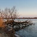 Utopený strom