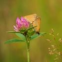 Motýlí láska