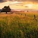 Letní večer na pastvinách