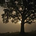 Před dubem , za dubem ...