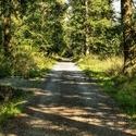 Cestou lesní